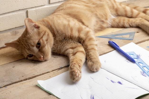 apprentissage chat